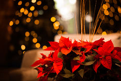 Christmas flower card with gold Royalty Free Stock Photo
