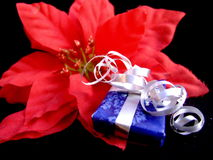 Christmas flower gift. Christmas flower decoration with a gift all wrapped in ribbons Royalty Free Stock Photo