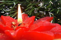 Christmas flower lit candle Stock Photography