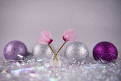 Christmas flower photography picture with English cyclamen pink petals and glitter tree decoration baubles in background Stock Images