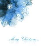 Christmas flower poinsettia Royalty Free Stock Photos