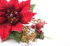 Christmas flower poinsettia. Isolated on white background Stock Photography