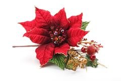 Christmas flower poinsettia. Isolated on white background Stock Photos