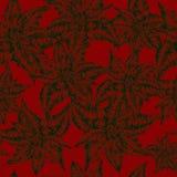 Christmas flower Poinsettia Stock Images