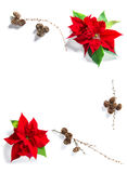 Christmas flower poinsettia pine cones Floral flat lay backgroun Royalty Free Stock Photo