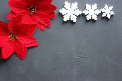 Christmas flower with red leaves of the poinsettias on a black background. A lot of copyspace for advertising. Christmas composition.Beautiful stylish royalty free stock images