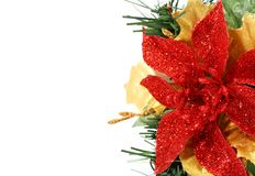 Christmas flower on the side Royalty Free Stock Photography