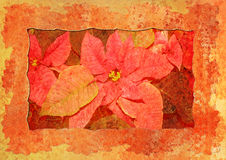 christmas flower styled vintage 免版税图库摄影