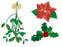 Christmas flowers Royalty Free Stock Images