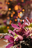 Christmas flowers. Close up of a beautiful christmas flower bouquet with bokeh christmas lights. Shallow dof Royalty Free Stock Photography