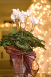 Christmas Flowers Royalty Free Stock Photography