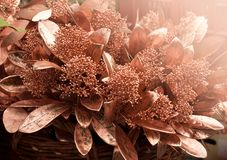 Christmas flowers with golden leaves. royalty free stock photography
