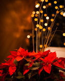 Christmas flowers with golden lights Stock Image