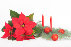 Christmas Flowers with red decoration balls and candles Stock Image