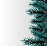 Christmas fluffy tree template. Festive greeting border. Realistic Merry Christmas branch blue pine tree template. Xmas mock up vector illustration. Isolated fir Stock Photography