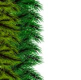 Christmas fluffy tree template. Isolated fir banner background. Happy new Year poster frame decoration. Festive greeting border. Realistic Merry Christmas branch Stock Photos