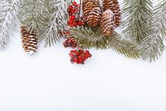 Christmas frame border on white, branches, cones and red berries Royalty Free Stock Images