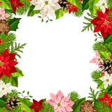 Christmas frame with fir branches and poinsettia flowers. Vector illustration. Vector Christmas frame with fir branches, colorful poinsettia flowers and cones Stock Photos