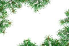 Christmas Frame of Fir tree branch with snow isolated on white background with copy space for your text. Top view.  Royalty Free Stock Photo