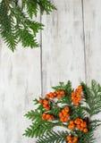 Christmas frame with fir tree and rowan berry Stock Photos