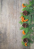 Christmas frame with fir tree, rowanberry and pinecones Royalty Free Stock Image
