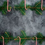Christmas frame made of winter tree and candy cane on grey background. Flat lay. top view. New year concept. Royalty Free Stock Photography