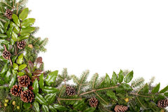 Christmas frame of pine tree branches - isolated on white. Christmas framework of pine tree branches and mistletoe isolated on white background Stock Photography