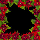 Christmas frame from poinsettia flowers. On black Stock Photography