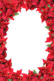 Christmas frame from poinsettias isolated Stock Photography