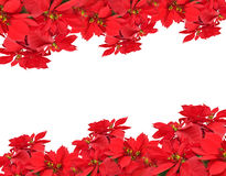 Christmas frame from poinsettias Stock Photos