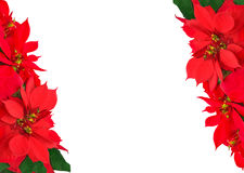 Christmas frame from poinsettias Stock Image