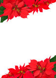 Christmas frame from poinsettias Royalty Free Stock Photography