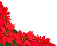 Christmas frame from poinsettias Stock Photography