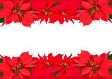 Christmas frame from red poinsettias Royalty Free Stock Photos