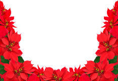 Christmas frame from red poinsettias Royalty Free Stock Photo