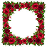 Christmas frame with roses, holly, fir branches and cones. Vector illustration. Stock Photos