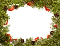 Christmas framework with evergreen fir tree, cones and holly ber Royalty Free Stock Photo