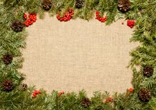 Christmas framework with evergreen fir tree, cones and holly ber Stock Photography