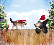 Christmas friends. A raccoon, cardinal, bear and chipmunk look over a fence with Christmas trees at the edges.  Concept for friends and the holidays Stock Images