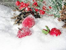 Christmas decoration winter berries and snow on wooden backgroun. Christmas fruit berries apple and decoration with fir branches snow Stock Photos