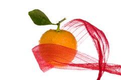 Christmas fruit and red bow. Orange fruit - calamondin on white Stock Images