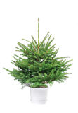 The  Christmas fur-tree ready to decorate. The Bare Christmas fir-tree in a flowerpot, ready to decorate. Isolated over vhite background Royalty Free Stock Photography
