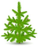 Christmas fur-tree on white. Green Christmas fur-tree with cones, object on white, vector illustration Stock Image