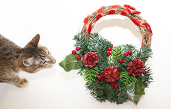 Christmas garland and a cat. Cat Christmas garland interested in a wreath Stock Photos