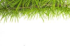 Christmas garland isolated on white background Stock Image