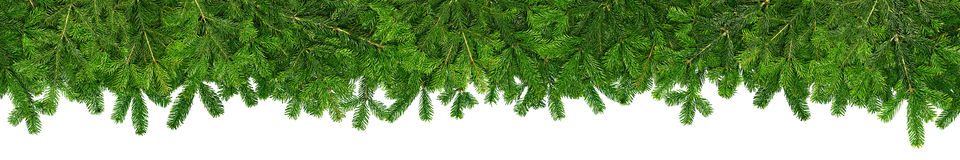 Christmas garland super wide panorama banner with fir branches