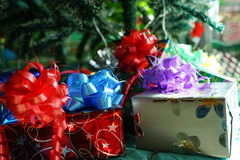 Christmas gift box lay under the pine tree Royalty Free Stock Image