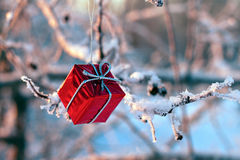 Christmas gift hanging on a tree in winter Stock Photography