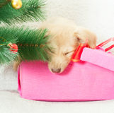 Christmas gift Stock Photography