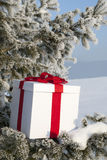 Christmas gift in a snowy forest near the pine Stock Photography